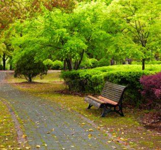 مناقصه فضای سبز در افوس