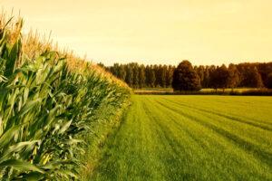 مناقصه جهاد کشاورزی آذربایجان غربی